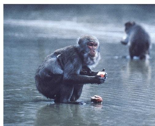Der Hundertste-Affe-Effekt