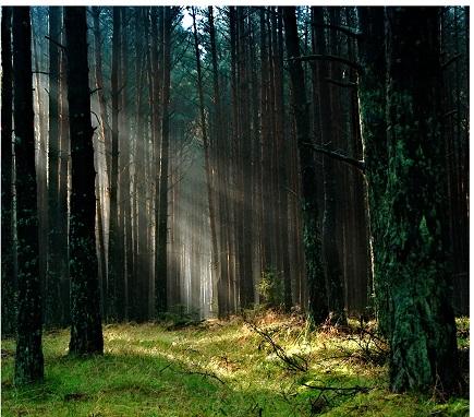 Täglich in den Wald gehen