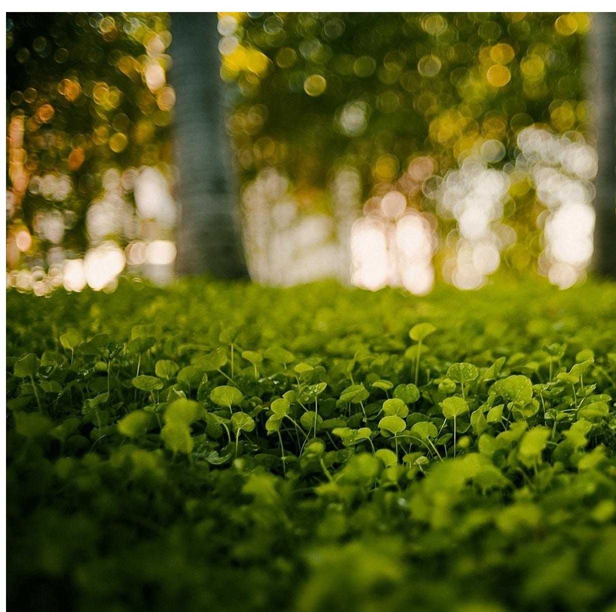 MSM- Pflanzen - Gemüse