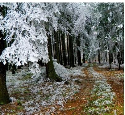 Lichtnahrung - Auch im Winter
